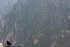 china2011-256