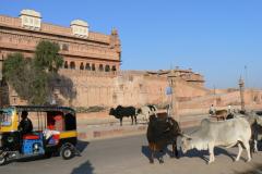 india_265