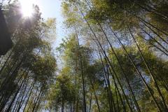 Bamboebos in Fenchihu