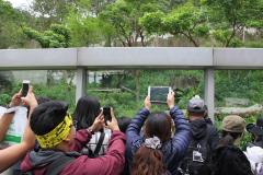Veel bekijks door cameralenzen voor de panda
