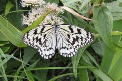 Leuk vlindertje