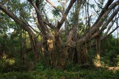 Grote boom onderweg