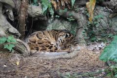 Slapen in de zoo